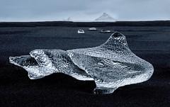 Ice Shark (Alan Amati) Tags: amati alanamati ice iceland icelandic blacksand black sand beach shark natural sculpture jokusarlon