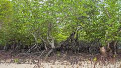 IMG_9909 (brian.b) Tags: philpipines palawan elnido bohol manila beach travel outdoor nature vacation pacific ocean