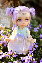 Garden ☆ (Shimiro Kestrel) Tags: pukifee ante fairyland pukifeeante bjd abjd cute kawaii tiny tinybjd spring pastel pastelgirl bjdphotography bjdportrait bjdcustom dollphotography
