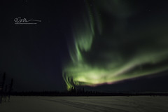 _64A1358 (Ed Boudreau) Tags: alaska northernlights auroraborealis nightphotography nightsky stars aurora winter winterscene winterscape landscape alaskalandscape landscapephotography auroratrapperscreek petersvillerd auroracolors