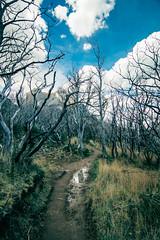 Senderos del Paine (lpcortesfotografias) Tags: chile nature landscape sonyalpha sonya58 tokina1116mm torresdelpaine naturaleza outdoor travel southamerica paisaje patagonia trees clouds path sendero forest nubes