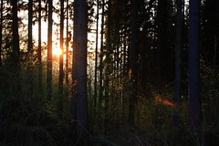 Sunbeams (_dankhn) Tags: nature backlight sun gegenlicht sunbeams lensflare light atmosphere trees wood forest wald sauerland