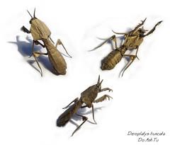 Deroplatys truncata (Đỗ Anh Tú) Tags: mantis paper origami