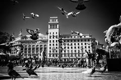 Barcelona (Fuji and I) Tags: spain barcelona birds pigeons blackandwhite travel alexarnaoudov fujix