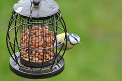 Going nuts...! (Orange Dean) Tags: bluetit tit outdoors nuts bird nikon d3100 tamron
