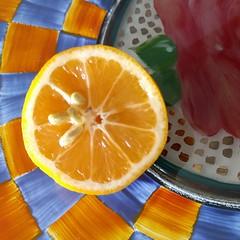 ...lemon delight. MM (allyndon) Tags: memberschoiceseeds macromondays seeds fruit lemon macro