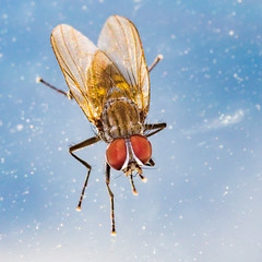 Take me to your leader. (Owen Llewellyn) Tags: owenllewellyn cygnusimaging fly window space effect canon eos 1dx mpe65 mt24ex 2x macro arthropod arthropoda colour color sky insect small micro diptera