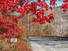 country road (albyn.davis) Tags: nature road country trees fall color red colors colorful bright vivid vibrant massachusetts shelburnefalls