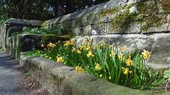 ruins (dave_attrill) Tags: ever end troughs eyam derbyshire peak district hope valley 11th century village bubonic plague breakout 1665 rev william mompessom anglo saxon roman lead mining 260 deaths main road rd architecture outdoor daffodils water historic mid 17th april 2017 national park white mines domesday book