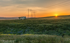 Johnny's Trailer at Sunset (Marsha Kirschbaum) Tags: sanluisobispocounty california temblormountains tansyphacelia a7rii sunset ©marshakirschbaum johnnystrailor derelect wildflowers powerlines landscape brokenglass grasses hillsidedaisies