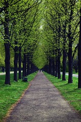 Green Avenue (shidoxy) Tags: avenue allee green grün nikon hannover tree baum plant pflanze