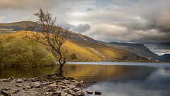 Llyn Padarn (Damian_Ward) Tags: damianwardphotography ©damianward damianward wales snowdonia gwynedd treelake water mountains llyn padarn llynpadarn