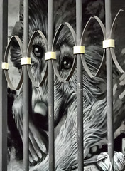 Into the Cage (occhio-x-occhio) Tags: rough watermark gray morning web street cement iron oxo rome abandoned streetart mural art wall g fb flickr