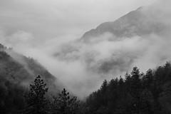 Ghost in the mist (matteo.buriola) Tags: friuli prealpi carniche monte ciavac andreis mist landscape trekking nikon d3100 mountains