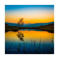 Lilly Tarn (Mark Lindstrom) Tags: sunrise tarn lakedistrict landscape loughriggfell canon5dmkiii canon1635f4 reflection stillness tranquil mountain cumbria leepolariser leendsoftgrad lonetree