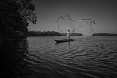 (Matias Baeza) Tags: colombia black white bw matias baeza pastaux pastu documentary photography fisherman net mangrove movement travel