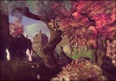 Dawn's Promise (ByrneDarkly-www.tartiste.wordpress.com) Tags: fantasyfaire2017 dawns promise dawnspromise secondlife landscape