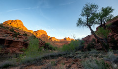 Horse Canyon Camp (Adam Isaac Photography) Tags: beutahful getoutside utahisrad 2017 60d aih aihphotography adamisaac canon canon60d eos backpacking beautiful canyon epic escalante exploration landscape lifeelevated redrock sandstone utah wingatesandstone
