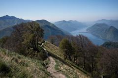 Sentiero Lago di Lugano (Toni_V) Tags: m2403962 rangefinder digitalrangefinder messsucher leicam leica mp typ240 type240 35lux 35mmf14asphfle summiluxm analogefexpro2 niksoftware hiking escursione wanderung randonnée monteboglia montesansalvatore montegeneroso montebrè lagodilugano alps alpen landscape landschaft trail wanderweg sentiero sentierolagodilugano frühling spring switzerland schweiz suisse svizzera svizra europe ©toniv 2017 170422 myswitzerland