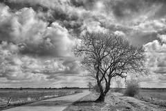 mein Baum.... (Ossiland) Tags: ostfriesland outback weg baum wolken april sw