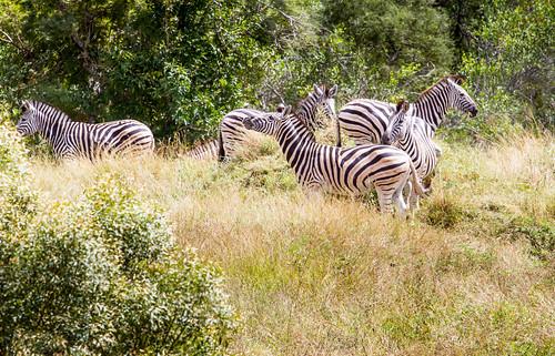 KrugerParkREIZ&HIGHRES-45