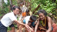 Sumatra Ouest Siberut chez les Mentawai (mekong69) Tags: île indonesia indonésie island archipel archipelago sumatra sumatrabarat siberut butui rorogot mentawai forêt uma worm sagoutier