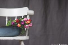 On the chair... (CarolienCadoni..) Tags: sony sonyslta99 sal85f14z tulips colors spring chair dof bokeh stilllife still