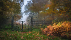 The Way ....through the fog. (Einir Wyn Leigh) Tags: landscape fog weather contrast golden trees park forest foliage green metal entry walking nature orange outside sunlight magical world happy detail exposure hill camera path nikkor