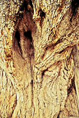 Rostro (carlos.smith.14473) Tags: naturaleza tree face mexico arbol oaxaca rostro
