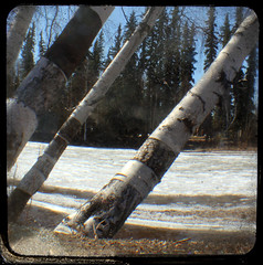 Chena Breakup (dr.Ozda) Tags: dog tree ice alaska river spring birch spruce fairbanks chenariver breakup drozda nordalerd