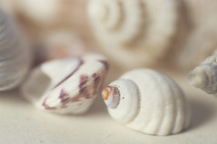 Shells 126/365 (*Jilltoo) Tags: shells white macro seashells pastel pale whiteonwhite
