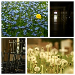 Forget-me-nots (NancyArmstrongThomson ~ back on board) Tags: life flowers blue school light white love grave collage dark death hall friend quiet cross earth empty science teacher desks dandelions forgetmenots flowersinspring picstitch