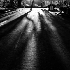 Shadows Of Trees (Jeremy Brooks) Tags: california camera shadow blackandwhite bw usa blackwhite elcerrito iphone contracostacounty