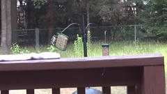 a little shaky but great woodpecker footage (Rebeccalovesbirds) Tags: june sonycybershot 2013 turnersvillenj
