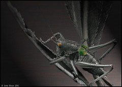grasshopper (dmitryryzhkov) Tags: macro photo nature insects grasshopper green film flickrandroidapp:filter=none
