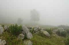 Nebbia d'estate (supersky77) Tags: alps fog alpes alpen nebbia alpi betula colma betulapendula betulla tanaro alpiliguri ormea valletanaro pizzodormea