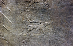 Lion Hunts of Ashurbanipal, mastiff