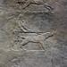 Lion Hunts of Ashurbanipal, mastiff