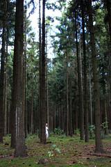 Hanna (Juliet Alpha November) Tags: wood trees woman white blur green nature forest escape dress jan natur grn frau holz wald bume flucht kleid weis unschrfe flchten meifert fliehen