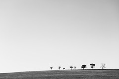 Line of trees in field (Maxim Petrichuk) Tags: trees sky abstract nature beautiful field horizontal contrast rural season landscape outdoors woods solitude loneliness natural state space bare empty horizon over nobody scene row area trunk backgrounds remote deciduous shape stark barren feature scenics treelined