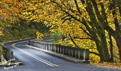 The Bridge at Latourell (Inspiritus) Tags: autumn fall bridges columbiagorge