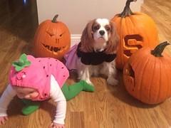 "Lauren and her pup Kona ready for Halloween • <a style=""font-size:0.8em;"" href=""http://www.flickr.com/photos/72564046@N04/10600849203/"" target=""_blank"">View on Flickr</a>"