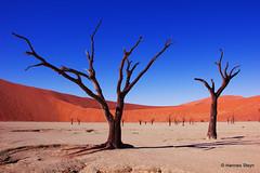 Deadvlei (hannes.steyn) Tags: trees nature canon landscapes sand scenery desert dunes sesriem namibia sossusvlei namib deadvlei camelthorn sigma1020mmf456exdchsm camelthorntrees 550d hannessteyn treesdiestandingup canon550d eosrebelt2i