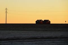 Frosty Rural Alberta Sunrise (Bracus Triticum) Tags: autumn canada rural sunrise october frosty alberta 10月 カナダ 十月 2013 神無月 kannazuki アルバータ州 かんなづき themonthwhentherearenogods 平成25年