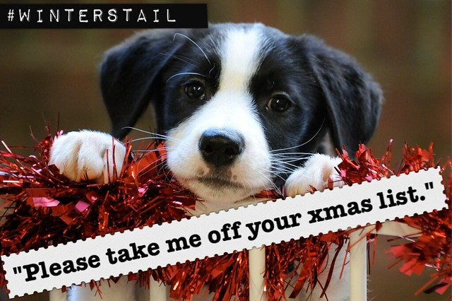 Thumbnail for #WintersTail - festive safety tips for your pets