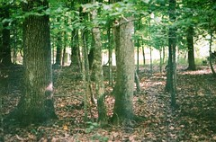 (Heather Floccari) Tags: trees green film nature 35mm lomo lomography woods pretty adventure explore