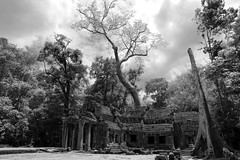 """""""Nature Re-Claims"""" - Ta Prohm Temples, Siem Reap, Cambodia (TravelsWithDan) Tags: blackandwhite bw nature landscape cambodia temples siemreap taprohm"""