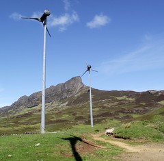 Our sheep do like our windmills, Isle of Eigg - Camille Dressler