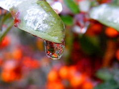 Frozen Drop