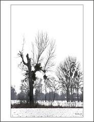 Nature morte (togipan) Tags: mygearandme flickrstruereflection1 flickrstruereflection2